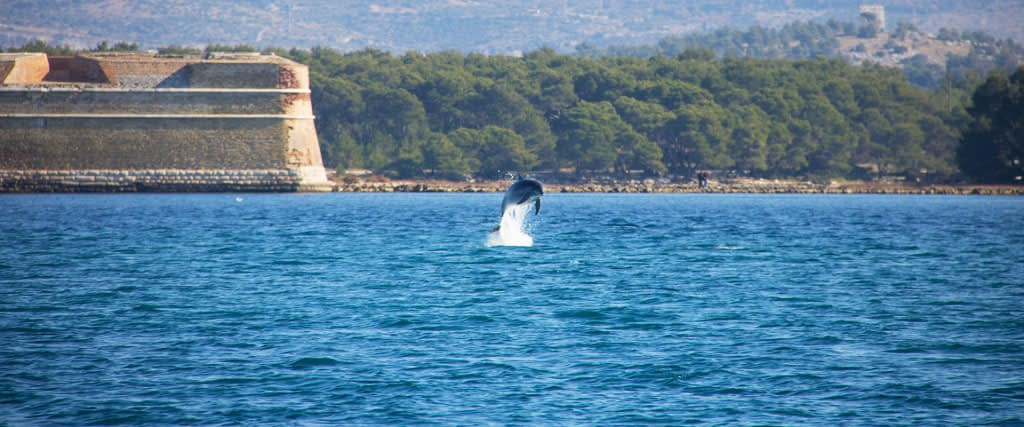Archipelago Tours Blog and Tips: Island Mana: Dolphins are back in Kornati!